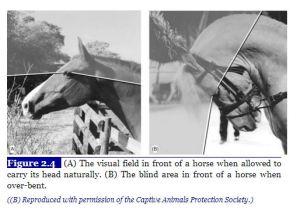 Hyperflex Visual Field