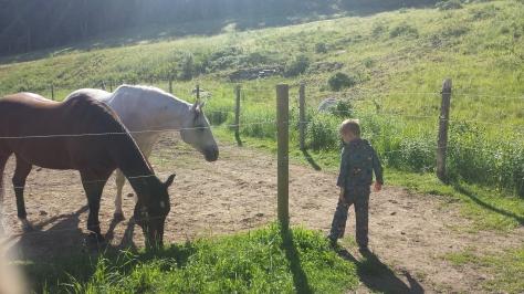 Jack PJs and Horses