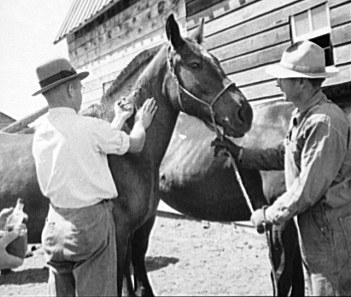 Horse Vaccination